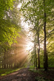 Sunlit forest Royalty Free Stock Photos