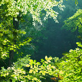 Sunlit Forest. A simple background of backlit green leaves, with the focus on a spiderweb sparkling in the late afternoon sun Royalty Free Stock Image