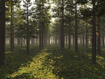 Sunlit forest. Sun shining at a low angle into a light forest Royalty Free Stock Images