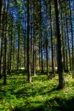 Sunlit Forest in Austria. In Summer Stock Images