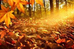 Sunlit forest ground in autumn Stock Photography
