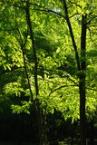 Sunlit Forest Stock Photos