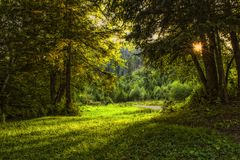 Sunlit forest of firs and old trees Royalty Free Stock Image