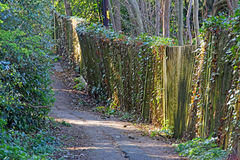 Sunlit forest path Royalty Free Stock Photos