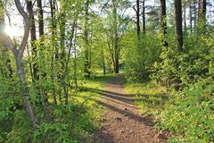 Sunlit forest path in Residensparken in Luleå Royalty Free Stock Photos