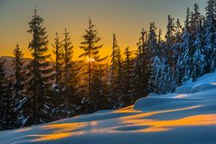 Sunlit forest and snow. Sunset scene Stock Photo
