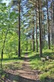 Sunlit forest trail Royalty Free Stock Photo