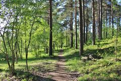 Sunlit forest trail Stock Images