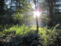 Sunlit Forest royalty free stock image