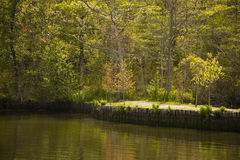 Sunlit Forest Trees along River Embankment in Spring Stock Image