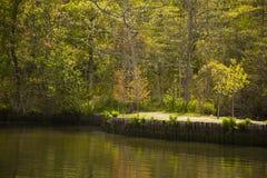 Sunlit Forest Trees along River Embankment in Spring Stock Image