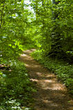 Sunlit forrest trail. Small trail leading through a lush green forrest, lit by the summer sun Royalty Free Stock Images