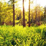 Sunlit Glade Royalty Free Stock Photography