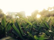 sunlit gräs Royaltyfri Bild