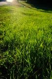 sunlit gräs Fotografering för Bildbyråer