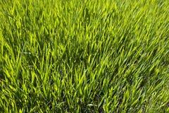 Sunlit grüne Wiese Stockfotos