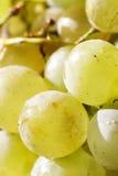 Sunlit grape closeup Stock Photo