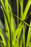 Sunlit Grass Stock Photo