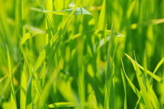Sunlit grass Royalty Free Stock Photography