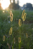 Sunlit grass background Royalty Free Stock Photo