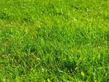 Sunlit grass background Royalty Free Stock Photography