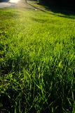 Sunlit grass. A beautiful summer day with sunlight stock image