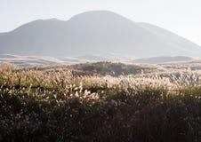 Sunlit grass on the meadows in Aso volcanic caldera. Aso-Kuju National Park, Kumamoto Prefecture, Japan royalty free stock image