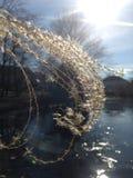 Sunlit grass over a pond Stock Photos