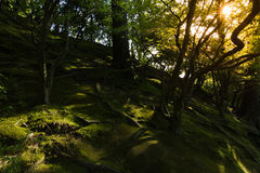 The sunlit on grass and roots in the woods. Royalty Free Stock Images