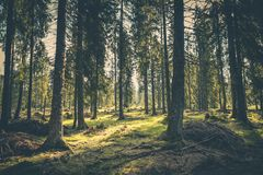 Sunlit grasses in forest royalty free stock image