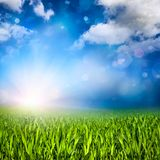 Sunlit grassland Stock Photography