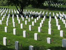 Sunlit Gravestones Stock Image