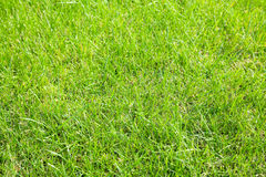 Sunlit green grass Royalty Free Stock Images