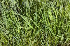 Sunlit green grass Stock Photo