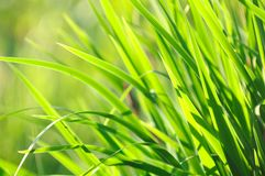 Sunlit Green Summer Grass Stock Images