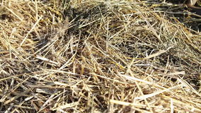 Sunlit hay stack stock footage