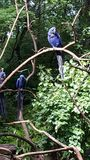 Sunlit hyacinth macaw Stock Photography
