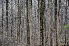 Sunlit Lacy Wintry Forest Stock Photos