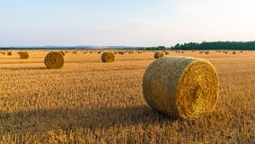 Sunlit landscape with many straw bales on a gold stubble field. Summer rural farmland after grain harvesting. Natural agricultural background. Blue sky, forest stock photography