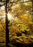 Sunlit leaves Royalty Free Stock Photos