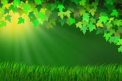 Sunlit Meadow. Ray of sunlight shining through the leaves on a grassy meadow Stock Illustration