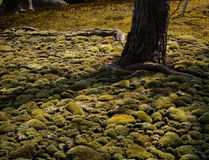 Sunlit moss garden Royalty Free Stock Photography