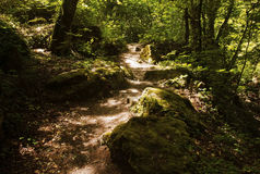 Sunlit moss and Rocky Path through Woods Stock Image