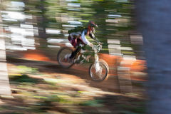 Mountain Biker. A male downhill Mountain Biker goes down the hill amongst the trees at speed stock photos