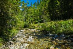Sunlit Mountain Creek with Clear Water in Austria. In Summer Stock Images