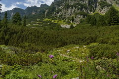 Sunlit mountain overgrown with coniferous forest and glade on the ecological walk  toward Maliovitza peak in Rila mountain. Bulgaria Stock Photography