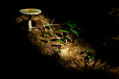 Sunlit Mushroom and Leaves Stock Photography
