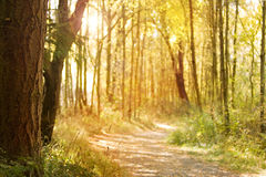 Sunlit nature path. Pacific northwest tree lined sunny dappled nature path