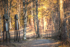 Sunlit nature path Royalty Free Stock Images