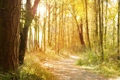 Sunlit Naturpfad lizenzfreie stockfotos